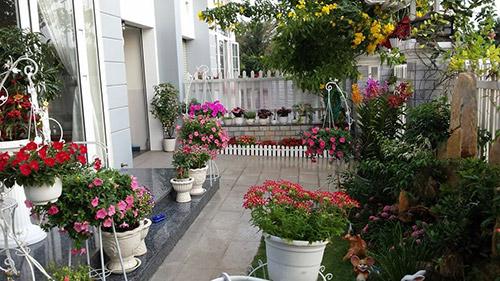 Cây cối trang trí cho nhà mới
