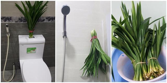 Khử mùi hôi nhà vệ sinh với lá dứa
